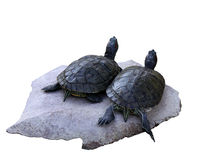 Two turtles Royalty Free Stock Photo