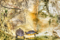 Two turtles on a grey rock Stock Photo