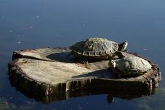 Free Two Turtles On Log In The Sunlight Royalty Free Stock Photos - 134330738