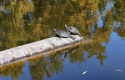 Two turtles rests on a pipe Royalty Free Stock Images