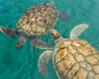 Two Turtles Royalty Free Stock Photos
