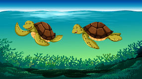 Two turtles swimming under the sea Royalty Free Stock Photo