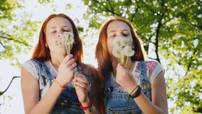 Two twin sisters play with dandelion flowers. Blow off the seeds. Slow motion video. Two red twin sisters are playing with dandelion flowers. The fans are stock video