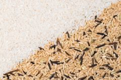 Two type of rice. White and wild background Royalty Free Stock Photos