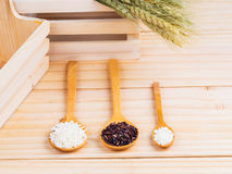 Two types of milled rice as raw ingredient Royalty Free Stock Photos