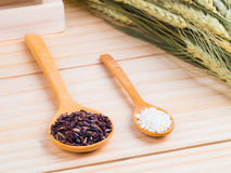 Two types of milled rice as raw ingredient Royalty Free Stock Photography