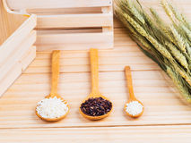 Two types of milled rice as raw ingredient Royalty Free Stock Image
