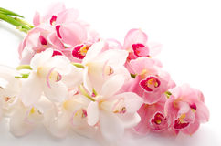 Two types of orchid Royalty Free Stock Image