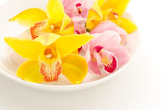 Two types of orchid on plate Royalty Free Stock Photography