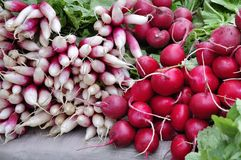 Two types of radishes Stock Photography