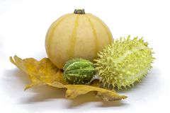 Pumpkin, horned melon vegetables. Two types of vintage vegetables, pumpkin, two horned melons on a dry leaf isolated on white Royalty Free Stock Photo