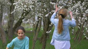 Two underage girls break branches of a flowering tree. springtime blossoming season funny games in nature. Two underage girls break off the branches of a stock footage