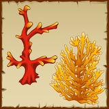 Two underwater coral red and yellow variety Royalty Free Stock Photos