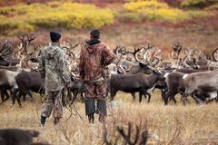 Two unidentifiable Evenk reindeer herders herdsman cowboy stand back and watch the herd of reindeer stock photography