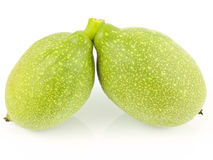 Two unripe walnuts Royalty Free Stock Images