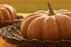 Two Unwashed Pumpkins in Baskets royalty free stock images
