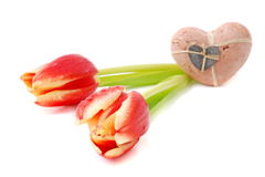 Two valentine tulips Stock Images