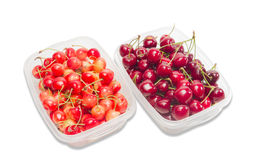 Two varieties of cherries Stock Image