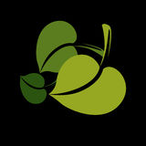 Two vector flat green leaves. Herbal and botany art symbol, spri Royalty Free Stock Photos