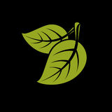 Two vector flat green leaves. Herbal and botany art symbol, spri. Ng season stylized ecology icon. Environment conservation element Royalty Free Illustration