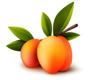 Two vector peaches Stock Photography
