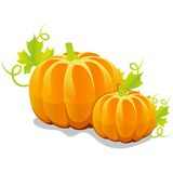 Two vector pumpkin Stock Image
