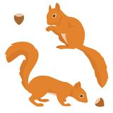 Two Vector Squirrels Royalty Free Stock Images