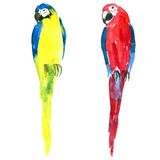 Two vector watercolor parrots Stock Photo