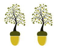 Two versions of oak growing from acorn. Illustrated two versions of oak growing from acorn on white background Stock Photos
