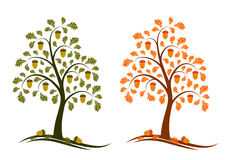 Two versions of oak tree. Illustrated two versions of oak tree on white background Royalty Free Stock Images