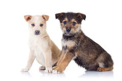 Two very cute stray puppies stock image
