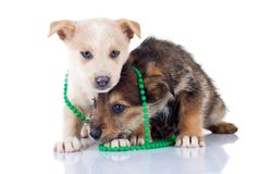 Two very shy puppies Stock Photos
