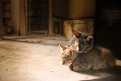 Two small kittens in the barn royalty free stock photography