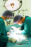 Two veterinarian doctor working in operating room Stock Image