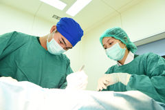 Two veterinarian doctor working in operating room Royalty Free Stock Photography