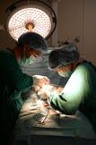 Two veterinarian surgeons Stock Image