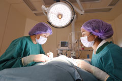 Two veterinarian surgeons in operating room Royalty Free Stock Photography