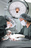 Two veterinarian surgeons in operating room Stock Images
