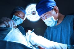 Two of veterinarian surgery in operation room Stock Photo