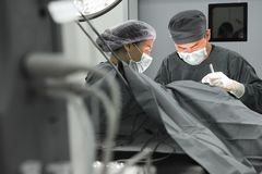 Two of veterinarian surgery in operation room Stock Images