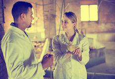 Two veterinarian talking, one having duckling Royalty Free Stock Image