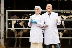 Two veterinarians on cows farm Royalty Free Stock Photos
