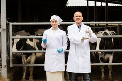 Two veterinarians  in cowshed. Joyful smiling men and women in white coats standing with cows and laboratory glass bottle Stock Images