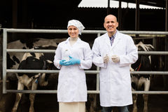 Two veterinarians  in cowshed. Smiling men and women in white coats standing with cows and laboratory glass bottle Stock Image