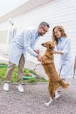 Two veterinarians playing with dog on yard. At veterinary clinic stock photography