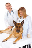 Two vets and dog Royalty Free Stock Photo