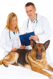Two vets examining dog. Vet and assistant examining dog, isolated on white Royalty Free Stock Images