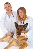 Two vets examining dog Royalty Free Stock Images