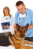 Two vets examining dog Stock Photo