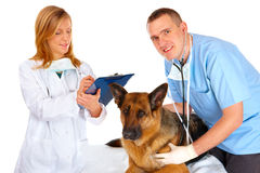Two vets examining dog Royalty Free Stock Photo